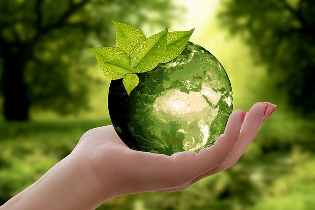 Sustainability expert